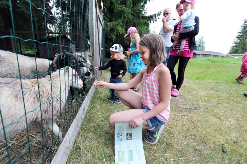 Lampaita nähdään tänäkin vuonna Katvalassa. Pinja Inkeröinen tervehti lampaita kaksi vuotta sitten.