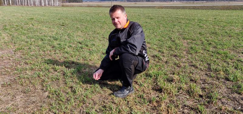 Maanviljelijä Heikki Jaakolan kotipellossa nurmi on alkanut kasvaa. Kasvukausi on tällä hetkellä kaksi viikkoa normaalia edellä.