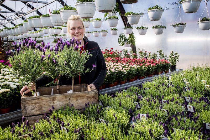Yrittäjä Tiia Ritamäki Taimitaikureilta vinkkaa, että esimerkiksi laventeli ja samettikukka toimivat hyvin tuholaishyönteisten karkottajina.