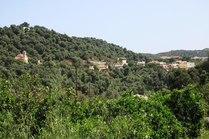 Kreetan pinta-alasta yli 60 prosenttia on oliivipuuviljelmiä.