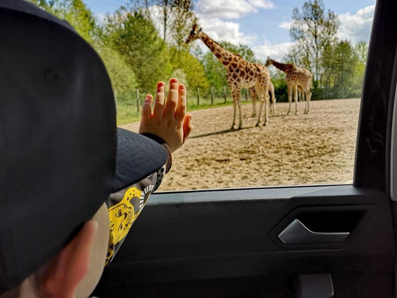 Givskud Zoossa voi leikkiä olevansa safarilla Afrikassa.