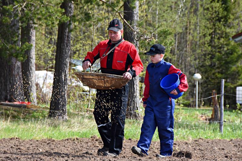 Toukosiunaus suoritettiin torstaina 16. toukokuuta Mieluskylällä Aunelassa. Kylvämässä isäntä Markku Jantunen Ville-poikansa kanssa.