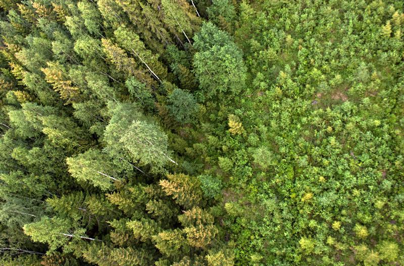 Metsävisa on Suomen Metsäyhdistyksen ja Biologian ja maantieteen opettajien liitto BMOL:n järjestämä metsätietokilpailu.