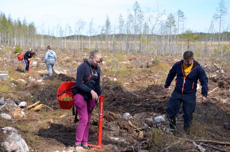 Halsuan kasiluokkalaiset istuttivat metsää, etualalla  Mirjam Alanko ja ohjaamassa Mikael Lehto, taustalla Hilla Melender ja Kätriin Sisask.
