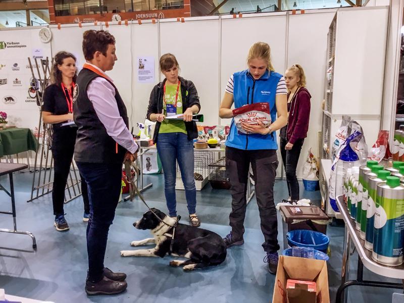 Kpedun opiskelija Pihla Pavas kilpailee eläintenhoidon suomenmestaruudesta. Tässä tehtävässä hän ottaa koiran vastaan hoitolaan, tekee sille terveystarkastuksen ja neuvoo omistajaa koiran ruokinnassa.