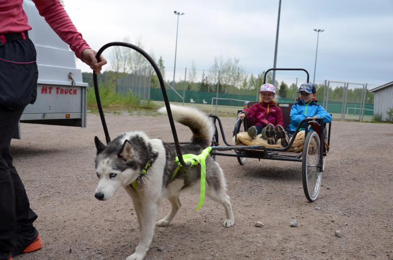Uusia kokemuksia. Yhdellä rastilla Marika Isoniemi ja Tuisku-koira antoivat eskarilaisille kyytiä.
