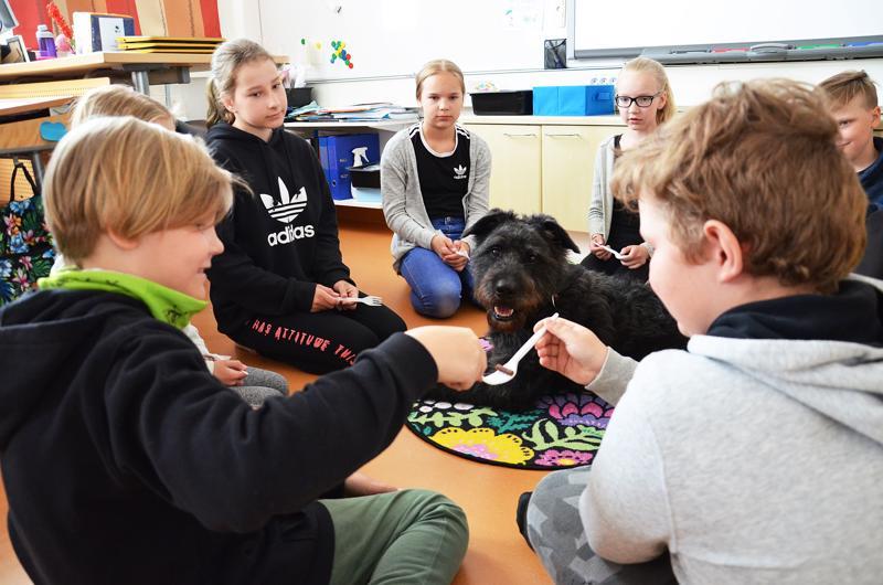 Kiviojan koulun nelosluokkalaiset opettelevat yhteistyötaitoja ja keskittymistä kierrättämällä koiran namupalaa muovihaarukoilla kuljettamalla. Sulo-Armas seuraa silmä tarkkana, josko nami tippuisi. Koiralle se annetaan onnistuneen kierroksen päätyttyä.