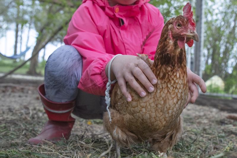 Kanat ovat helppoja kesälemmikkejä. Kunhan niiden veden vaihtaa päivittäin, ruokaa on aina saatavilla ja elintilat ovat kunnossa, ei niiden hoitaminen paljon muuta vaadikaan.