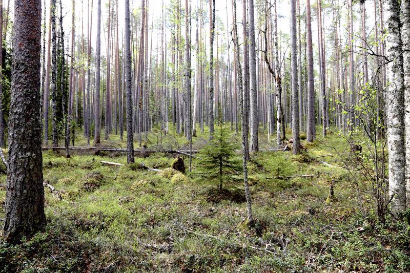 Metsä reitin varrella on luonnon tilassa, sillä reitti sijaitsee Natura 2000-alueella.