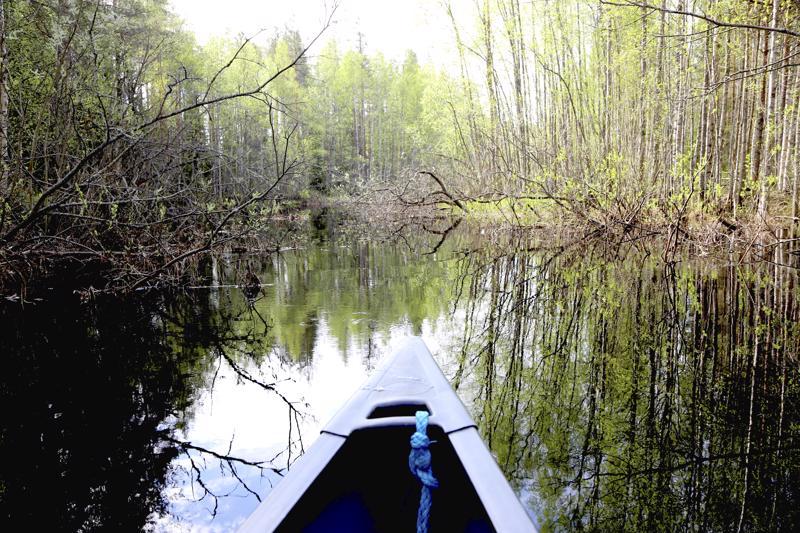 Reitiltä on viime vuosina metsähallituksen luvalla raivattu vedestä pois puustoa. Kun veden pinta on kevättulvien jälkeen laskenut, on Jorma käynyt reitin tarkistamassa. Liikaa ei kuitenkaan raivata, sillä Penninkijokeen kurottelevat oksat tekevät reitistä mielenkiintoisen.
