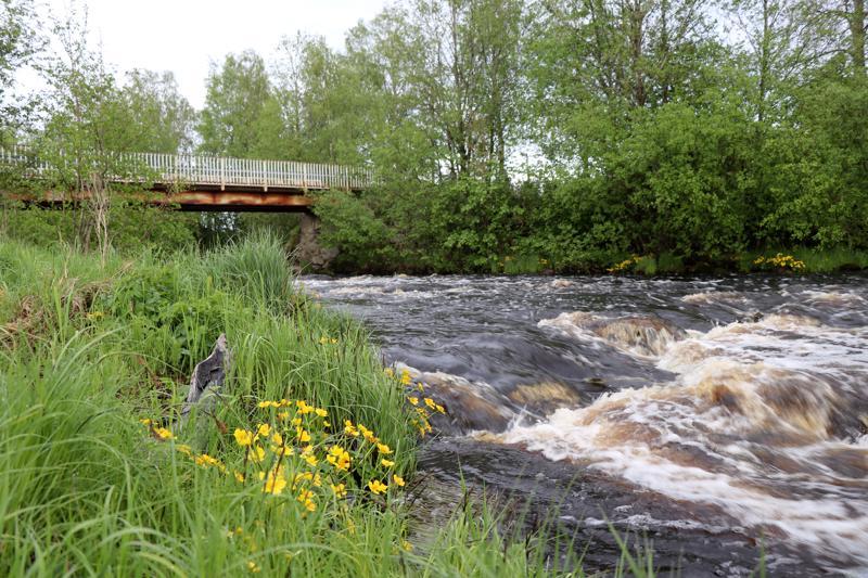 Mankkilansaaren silta Salonkylässä.