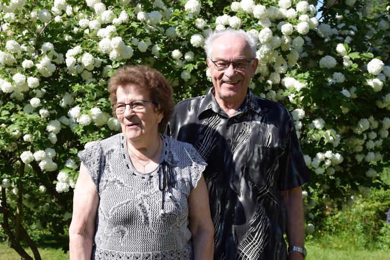 Terttu ja Einari Marjakankaan häissä juhlavuutta lisäsivät juhannus ja juhannusruusut, 56 vuoden jälkeen lumipalloheisi on kauneimmillaan.