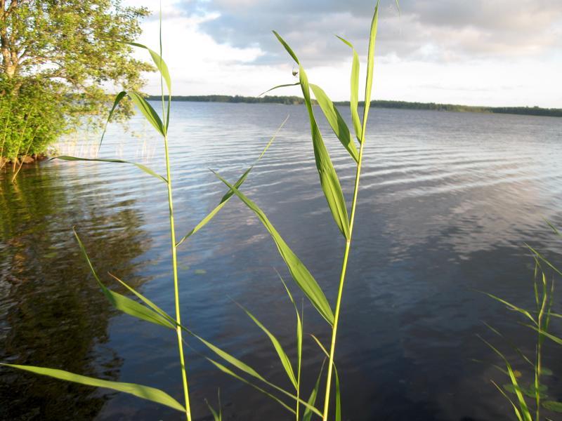 Perhonjokilaakson vesistöissä ei ole toistaiseksi uhkaa sinilevästä.