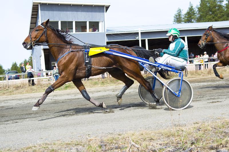 Knickerbocker ja Pekka Honkanen voittivat Oulaisissa, aivan kuten myös Nivalan paikallisraveissa kolme vuotta sitten.