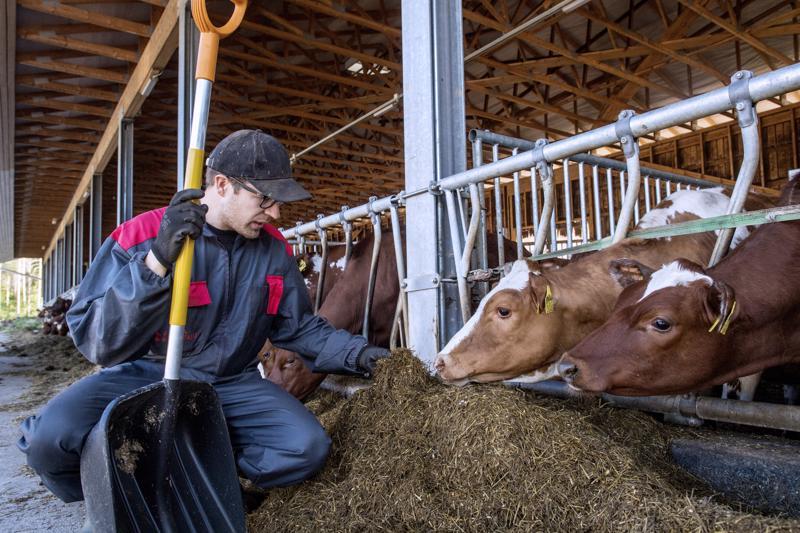 Eläinten hyvinvoinnista huolehtiminen on tärkein osa maanviljelijän työtä.