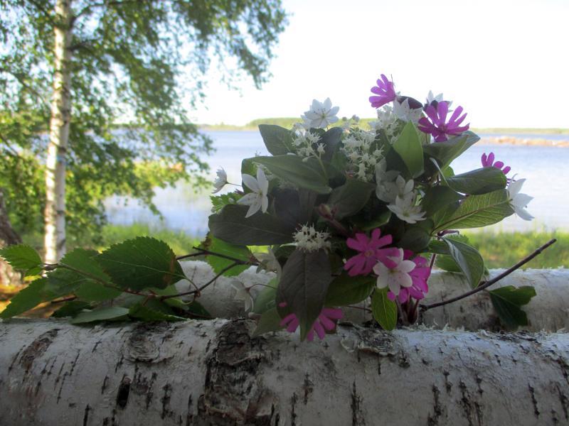 Reetta Siermala Kokkolasta lähetti juhannustunnelmaa koivun ja kukkien muodossa.