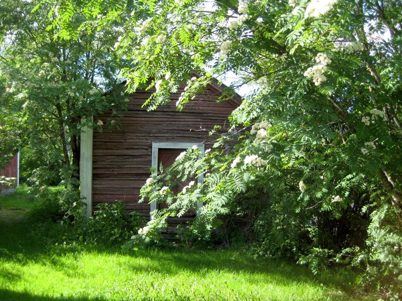 Vanha aitta puiden varjossa Toholammilla.