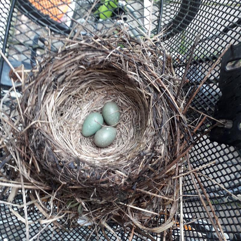 Kolme munaa.