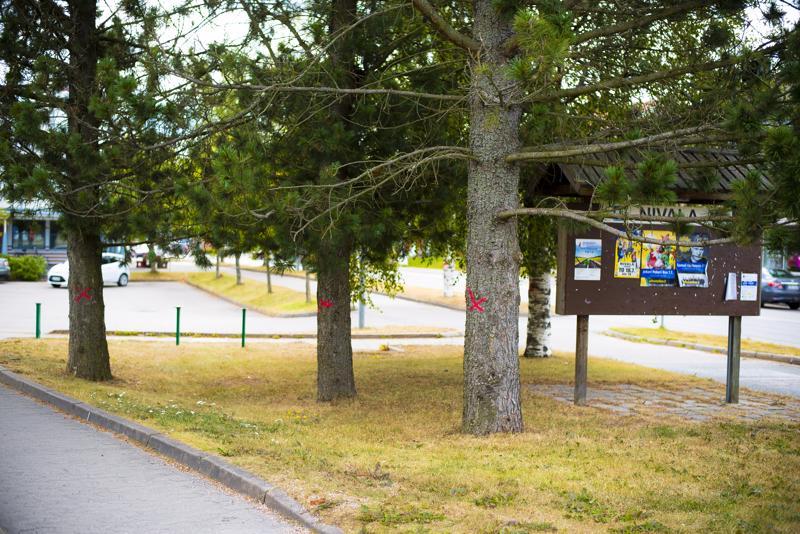 Myös ilmoitustaulun luona olevat puut tekevät tilaa uudelle parkkialueelle.