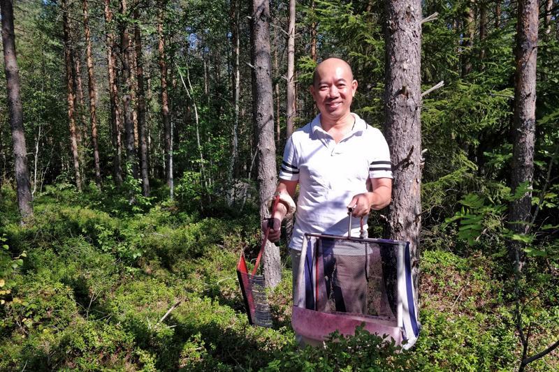 Chong Do Vo esittelee marjastajan parasta apuria, pitkävartista marjaharavaa. Sillä voi selkä suorassa kerätä sinistä herkkua suoraan isosuiseen ja kovapohjaiseen kassiin.
