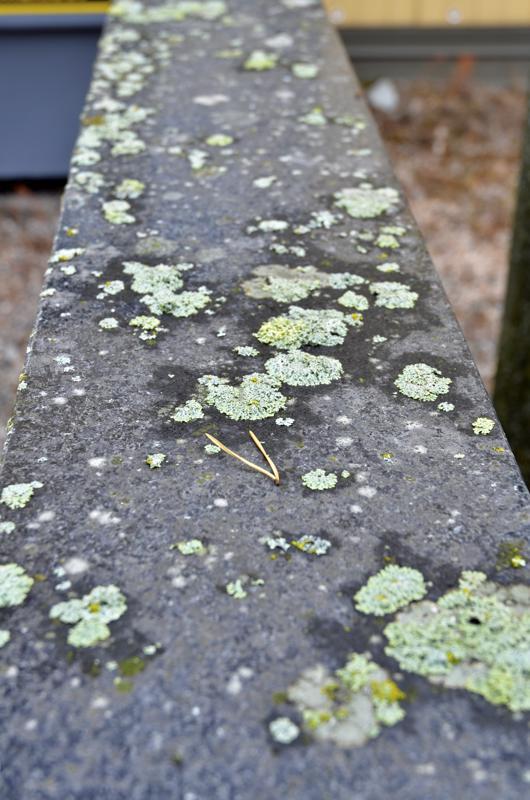 Sammalta alkaa kasvaa herkästi varsinkin hautakiven päälle.