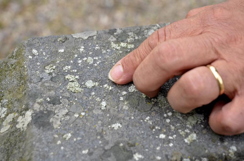 Mitä kauemmin sammal ja jäkälä saavat kasvaa kivessä, sen vaikeampi ne on saada pois.