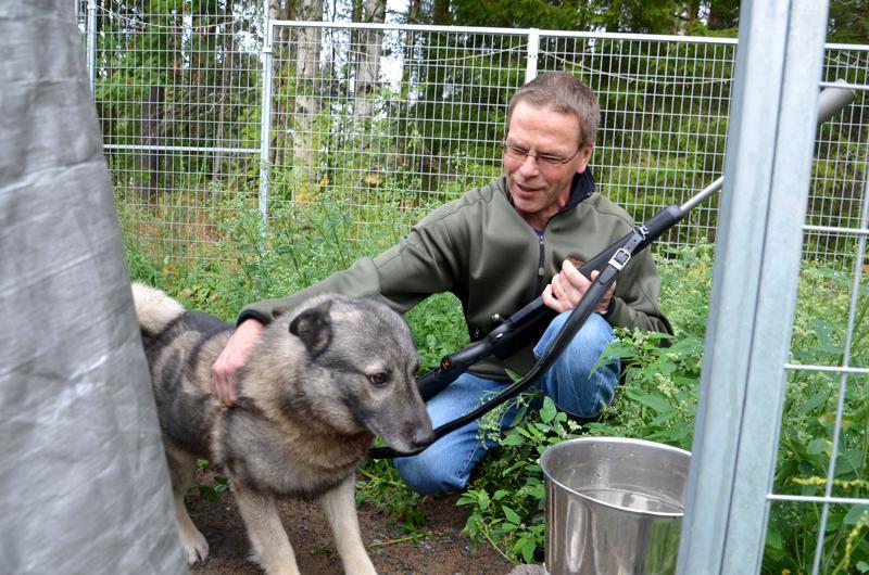 Raudaskylän hirviporukan koira, Minna Jalosen norjanharmaa tuntee hyvin Juha Isokosken.