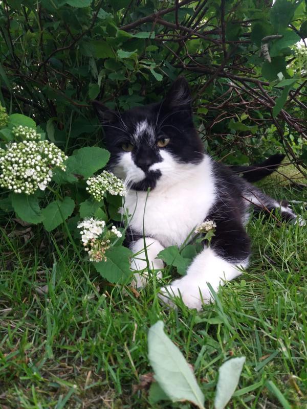 Paula Aution Hessu-kissa on nähty viimeksi viime viikon maanantaina tai tiistaina.