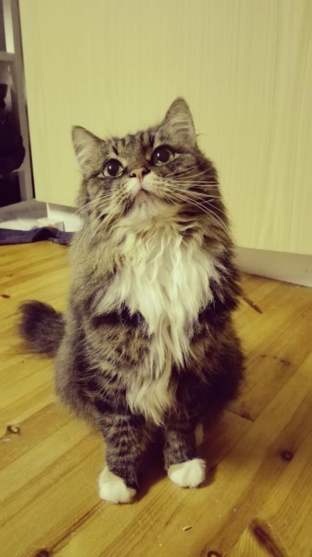 Sari Kumpulaisen Lotta-kissa on myös kateissa.