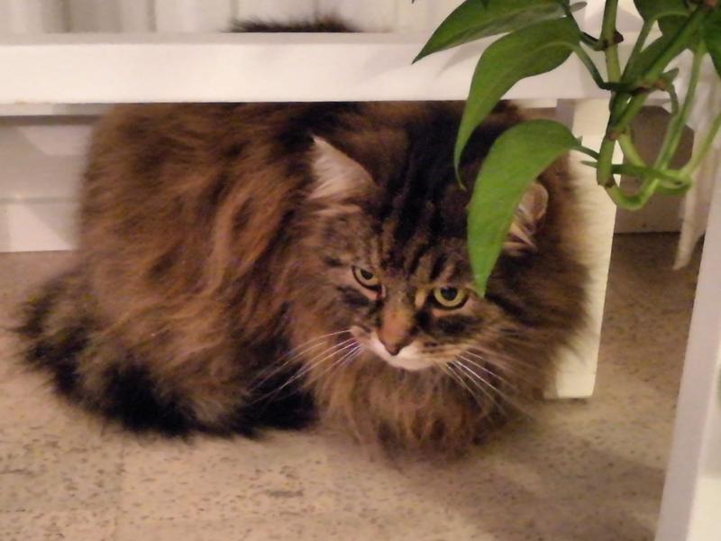 Viitalan Onni-kissa on yksi kadonneista.