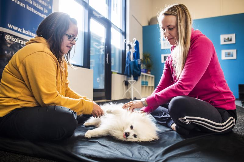 Sari Stenman opiskeli koirahierojaksi Oulussa. Heli Rauhalan Buli-koira on kokenut hierojakävijä.