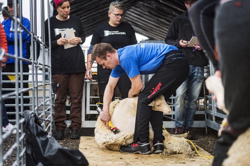 Äänekoskelainen Marko Känsälä on kerinnän moninkertainen suomenmestari. Tällä kertaa hän sai voitostaan palkinnoksi kerintäkoneen.