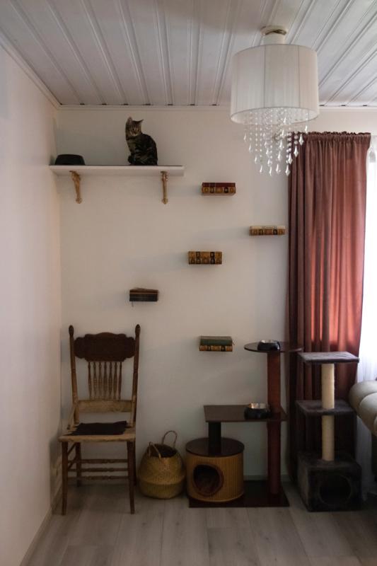 Kissoille on tehty kiipeilyseinä vanhoja kirjoja hyödyntäen.