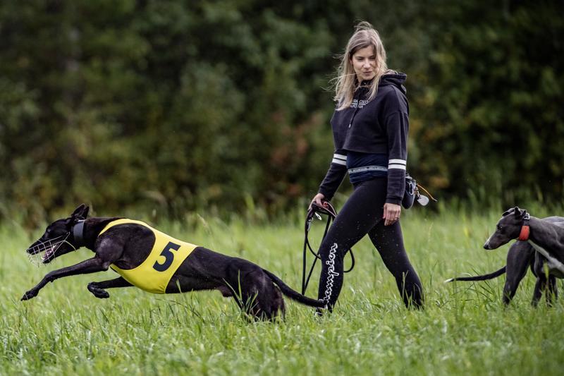 Heidi Rantakangas ihastui vinttikoirien ulkonäköön kymmenen vuotta sitten.
