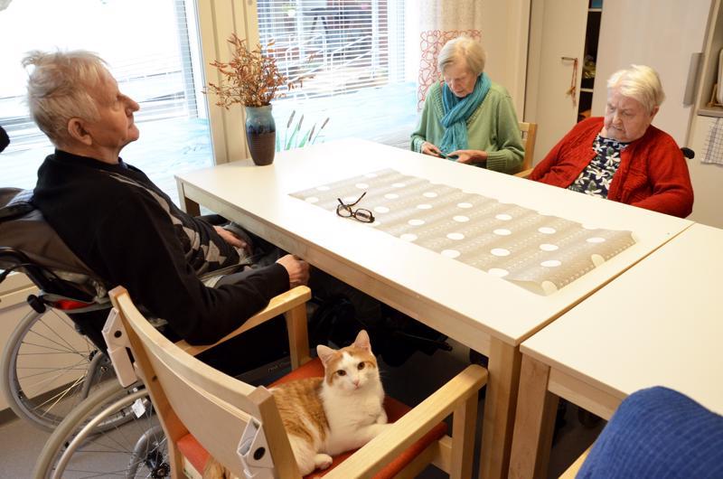 Ratapuiston Oskari-kissa loikkasi ruokailunsa jälkeen pitämään läsnäolollaan seuraa Mauno Löytynojalle, Raili Braxille ja Saima Ojanperälle.