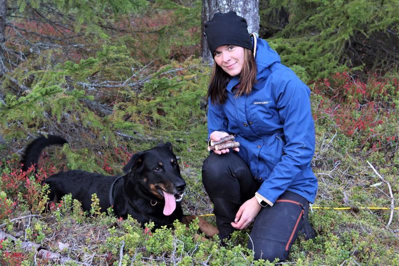Uusikaarlepyyläisen koiraharrastaja Sofia Laitalan viisivuotias beaucenpaimenkoira Ozzy löysi metsäjäljeltä kaikki sinne laitetut jälkikepit.