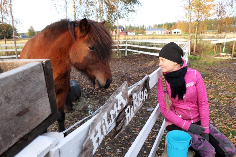 Herkir kuuluu Susanna Hakala-Virkkalan pyorittämän Alitalon tilan eläinkatraaseen.