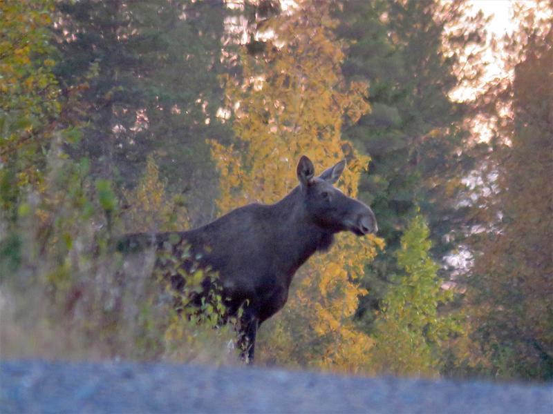 Metsähallituksen erävalvonta muistuttaa, että metsästäjät voivat hyödyntää teknisiä apuvälineitä, kunhan se tehdään oikein.