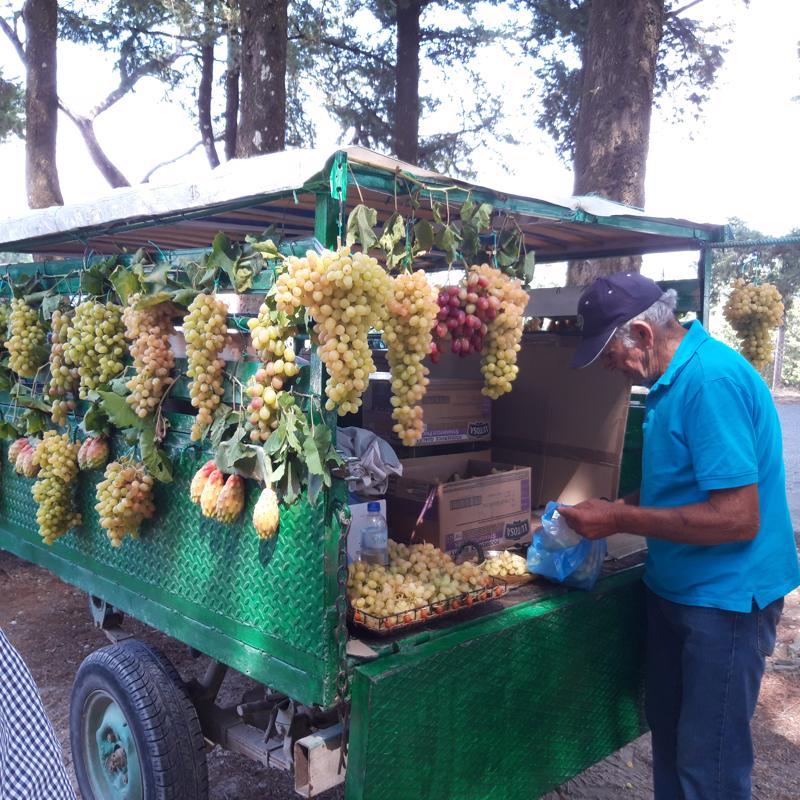 Rodoksella työtä tehdään vielä vanhoilla päivillä. Tämä viljelijä myy rypäleitään turistibussien pysähdyspaikalla.