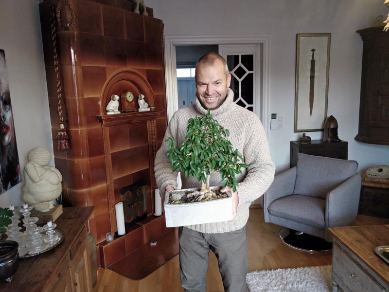 Mika Lehtinen kasvattaa bonsaipuita lähinnä suomalaisista puista kotipihan piristykseksi. Viisivuotias benjaminfiikus-bonsai on yksi kokeiluista huonekasvien parissa.