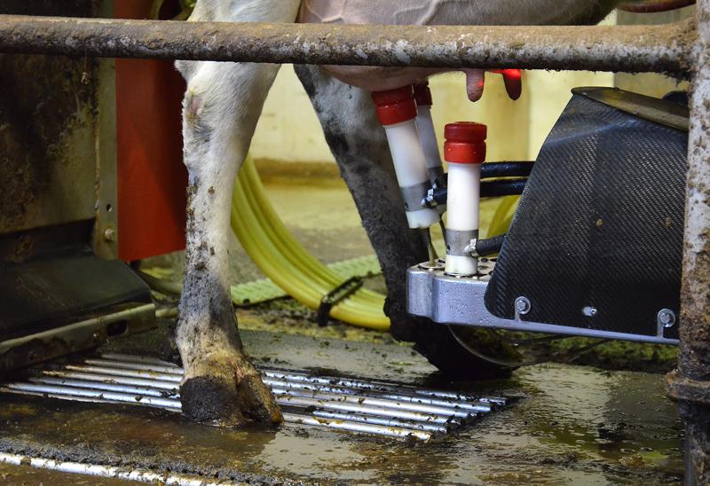 Lypsyrobotti käyttää apunaan laser-tenkiikkaa vetimien tarkan sijainnin havaitsemisessa.