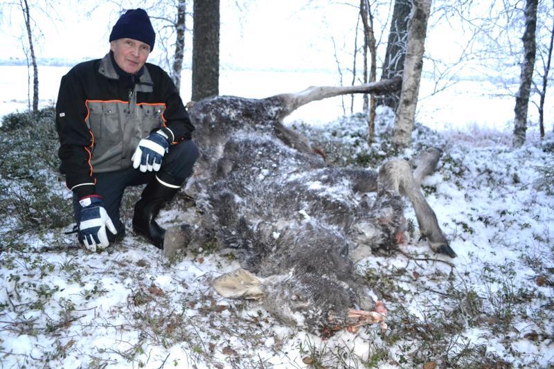 Paavo Laajalahti löysi vasanpuolikkaan Kuonanjärvestä. Nyt hirvenraatoa on käynyt syömässä korppiparvi.