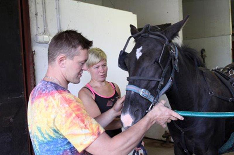 Forssan seudulla talliaan pitävät Tiina ja Juha Koskela ovat erikoistuneet varsojen valmennukseen.