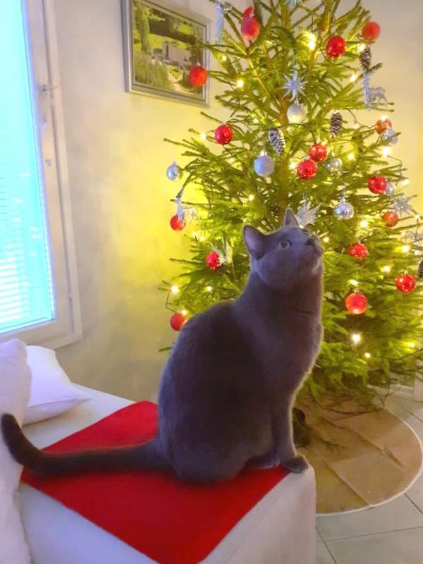 Joulu on myös eläinten juhla. Juhani Willmanin kuva Kokkolasta.