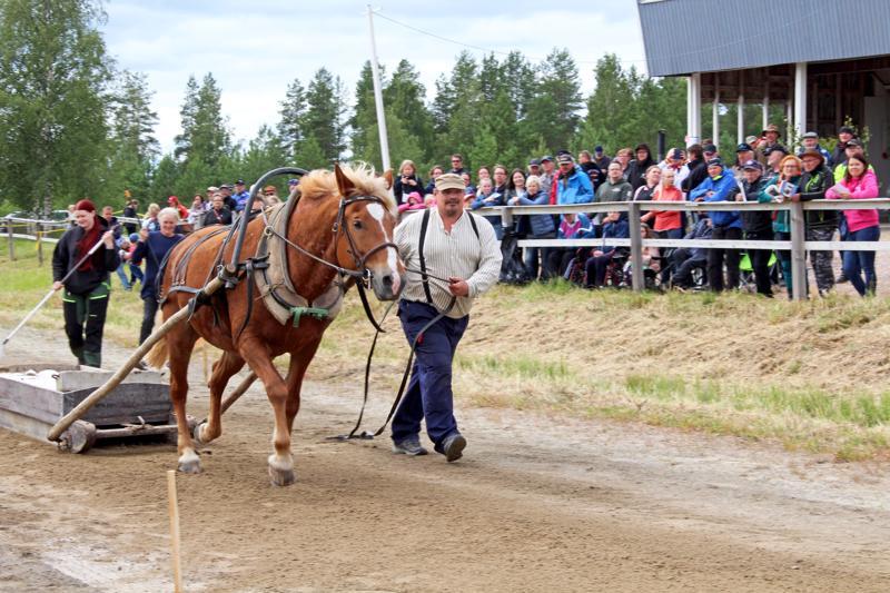 Suomenhevoset kilpailivat heinäkuussa Nivalan raviradalla SM-työhevoskilpailussa. Voiton vei kälviäläinen työpari Mikko Uusimäki ja Luomutar, jotka voittivat SM-kultaa myös vuotta aiemmin. Nivalasta mukana oli Maritta Vuorelan Virmaliina.