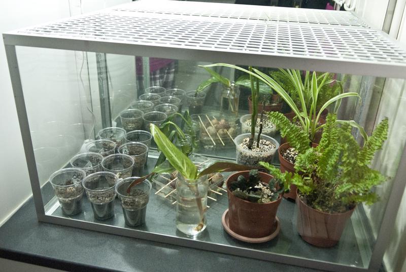 Kasvit saavat ensiapua kylpyhuoneessa. Akvaariomaisessa tilassa riittää kosteutta ja valoa. Samassa tilassa Mansikka-aho yrittää kasvattaa muun muassa avokadoja ja nektariineja siemenestä.