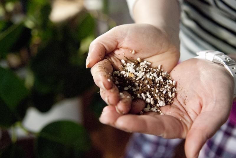 Kasvit Mansikka-aho istuttaa kookoksen ja perliitin sekoitukseen mullan sijaan.
