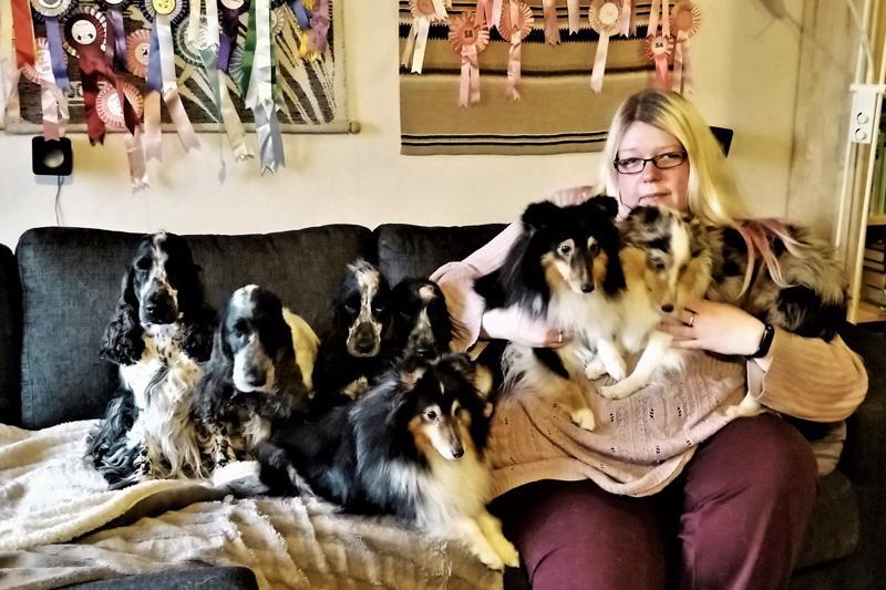 Kati Wester ja komea koirakatras: cockerspanielit Merja, Neiti, Taika ja Rushi, sekä Shetlanninlammaskoirat Flikka, Kiira ja Lycka.