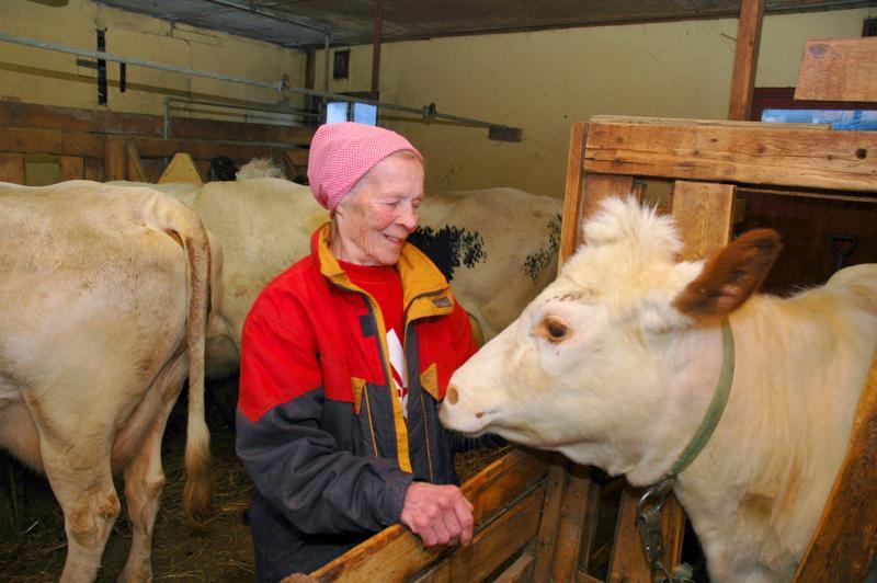"""Eeva Nevala, 80 vuotta, aikoi jatkaa karjanhoitoa niin kauan, kun terveyttä ja kiinnistusta riittää. Lehmät olivat hänelle elämäntapa. """"Mihkäpä ne lehmät kotuuan"""", Eeva tuumi."""