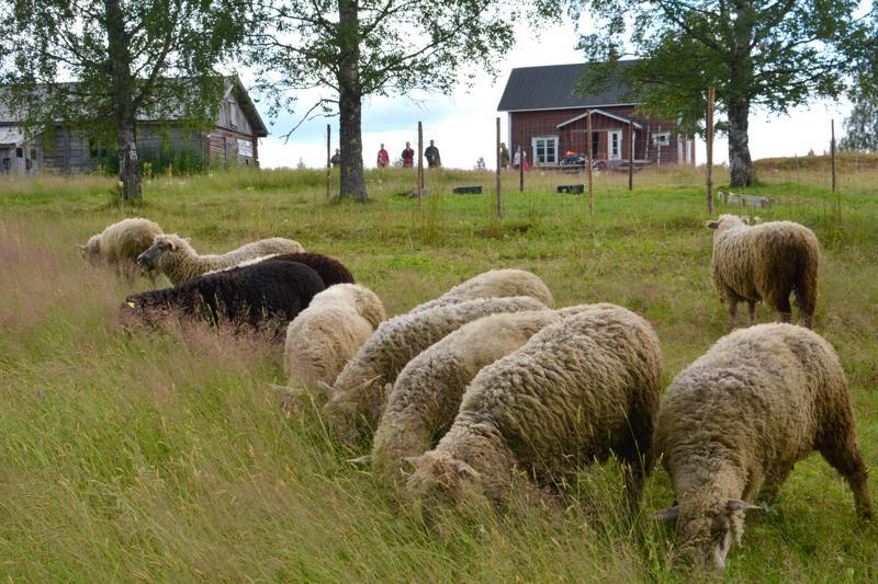 Tilan koosta riippuen paimen voi ottaa mukaan myös perheen tai ystävän paimenseurakseen.